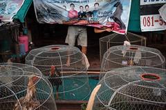 * (Sakulchai Sikitikul) Tags: street snap streetphotography summicron songkhla sony 35mm leica thailand fightingcock cock hatyai a7s