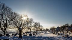 St-Jean Cemetery, Quebec, Canada (Tasmanian58) Tags: cemetery cimetière stjean stjohn winter vintage lens contax zeiss distagon 25mm 2825mm landscape snow village stlawrence stlaurent fleuve river