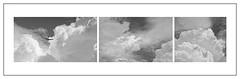 Bird Clouds. Skies above Undisclosed Location, Illinois. (bob zdeb f.00010110) Tags: bird clouds polyptych triptych canonef100400mmf4556lisiiusm fe55mmf18za sonnar sonyfe55mm18sonnartzasel55f18z sel55f18z cloudsstormssunsetssunrises