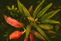 End of Summer Tones (kylebagleyphotos) Tags: nature macro photography plant pnw washington tones summer