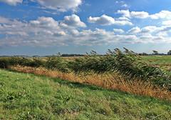 im wind (Wunderlich, Olga) Tags: wolken landschaft tribbevitz landschaftsfoto deutschland mecklenburgvorpommern landschaftsbild inselrügen landscapephotography rügen wolkenhimmel blau grün naturphotography feld naturfotografie landschaftsfotografie