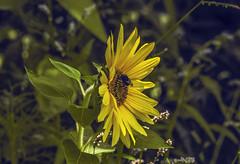 Flowers. (ost_jean) Tags: nikon d5300 tamron sp 90mm f28 di ostjean