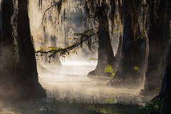 Swamp Alley (jojo (imagesofdream)) Tags: bayou mist swamp southern state