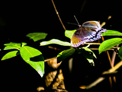 Butterfly in Mississippi (_Lionel_08) Tags: bugs butterfly insect insects wild wildlife wings black bug canon color colorful colors contrast