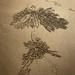 Ghost Crab sand art