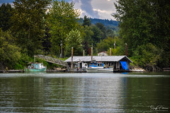 Bedford Channel (Fraser River) - Fort Langley (Explored) (SonjaPetersonPh♡tography) Tags: fortlangley fraserriver bedfordchannel oldboats riverbank boatshed nikon nikond5300 townshipoflangley waterfront waterscape waterreflections reflections landscape delapitated oldbuilding