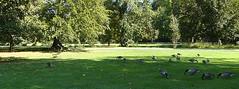 Parc du Château de vizille (focus73) Tags: lumix dmcfz300 oiseau