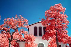 All Saints Episcopal Church (Infrakrasnyy) Tags: sony nex 5n infrared ir kolari kolarivision 550nm beverly hills 90210 palm trees cactus urban landscape all saints episcopal church