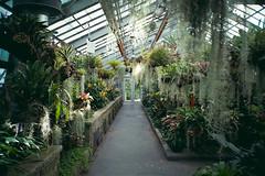 (Just A Stray Cat) Tags: kodak farbwelt 200 greenhouse botanical botanic garden gardens montreal quebec canada