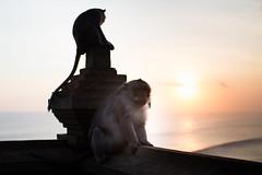Uluwatu-Telmple at sunset.. (paul.wienerroither) Tags: uluwatu temple sunset monkeys ocean oceanlove bali indonesia light sunlight travel travelphotography photography canon 50mm 5dmk3 colors colours beforeitgetsdark lightanddark reflection water sea animals sky view nature beautiful