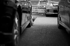 猫 (fumi*23) Tags: ilce7rm3 sony 85mm fe85mmf18 sel85f18 blackandwhite monochrome bw katze gato cat chat animal neko a7r3 emount street alley ねこ 猫 モノクロ