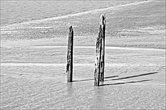 Stuck Fast Monochrome (brianarchie65) Tags: sticks mud river riverhumber kingstonuponhull monochrome blackandwhite blackandwhitephotos blackandwhitephoto blackandwhitephotography blackwhite123 blackwhiterealms humberbridge unlimitedphotos ngc yorkshirecameraramblers flickrunofficial flickr flickruk flickrcentral flickrinternational ukflickr canoneos600d geotagged brianarchie65 silt rottenwood water