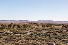 Dalhousie Springs vegetation (lemien) Tags: rivor outback desert travel oztourssafaris australia centralaustralia witjira flora dalhousiesprings southaustralia plants au