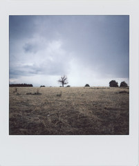 Tranquillity (Italian Film Photography) Tags: landscape minimal tree sky clouds field countryside grass instant instax film analogue pellicola istantanea fujifilm square sq6 paesaggio albero cielo nuvole rural