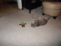 DSCN3202 (mestes76) Tags: 100617 duluth minnesota cats pets fetty fettucini cattoys butterflies playing