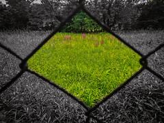 gate (rasa@1975) Tags: serbia srbija nikkor nikon naturesoul nature green twop texture explore lightroom artland flickr