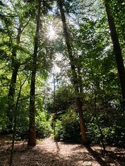 Landgoed Boekesteyn (ome.henk) Tags: graveland natuurmonumenten tegenlicht bomen natuur bos boekesteyn