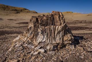 Petrified Wood - Bisti De Na Zin