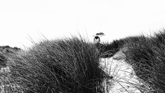 the dunes (frax[be]) Tags: atmosphere beach 23mm fuji xe3 outdoor umbrella noiretblanc monochrome poetry composition moody highcontrast blackandwhite bw blackwhitephotos