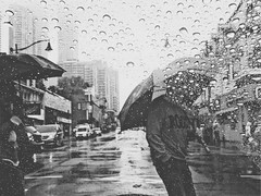 (Katoky13) Tags: road people building city street rain fall blackandwhite umbrella drops torontodowntown ontario toronto downtown canada