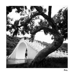 201809 大湖公園 Taipei (BALY WU) Tags: hasselblad 503 cx zeiss cf 60mm hp5 lc 29 大湖公園 taiwan taipei park bridge film tree 內湖區