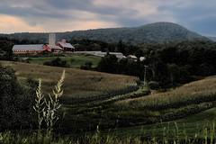 Tinkering with Fantasy (Szoki Adams) Tags: fletcher vermont farm fantasy landscape countryside latesummer cornfields clouds buildings fields path idyllic