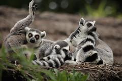 IMG_4370 (gabrielgs) Tags: holiday holiday2018 vakantie2018 camping frankrijk france zoo la fleche lafleche animals dierentuin loire