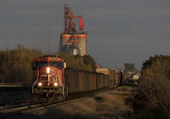 Maximizing Time (Trevor Sokolan) Tags: alberta ab lamont a411 local freight sd75i emd gmd gm generalmotors diesel locomotive elevator grainelevator concrete prairie prairies vegrevillesub canadian canada cn cnr canadiannational railway railroad railfan rail railfanning trains train trainspotting tracks sunset