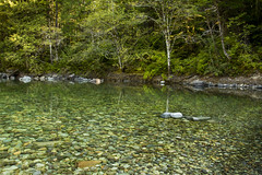 Santiam River in the Opal Creek Wilderness area, Oregon (icetsarina) Tags: santiamriver oregon opalcreekwildernessarea water rocks clear river bank trees forest saariysqualitypictures