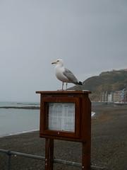 Aberystwyth (Dubris) Tags: wales cymru ceredigion aberystwyth seaside coast seagull beach