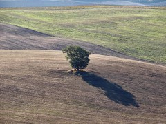 Arbre solitaire (Jolivillage) Tags: jolivillage paysage paesaggio landscape valdorcia toscane tuscany toscana italie italia italy europa europe arbre albero tree ombre ombra shadow picturesque geotagged