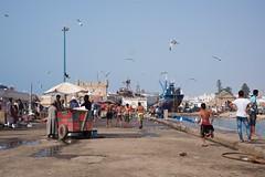 Port Essaouira (pan_orama) Tags: marokko maroc morocco essaouira beach harbour seagulls fish sun color travel