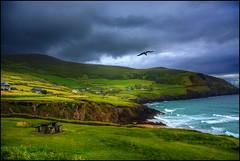 Free like a Bird (angelofruhr) Tags: strand wolken sleahead irland dingle kerry countykerry klippen küste ireland bird möwe coastline