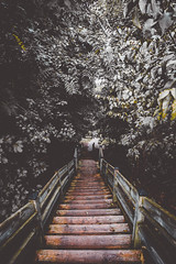 old views (viewsfromthe519) Tags: green forest ontario canada tall trees path canadian nature london byron springbank park stairs wooden steps