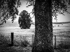 rnor82244.jpg (Robert Norbury) Tags: fuckit somearelandscapessomearenot icantbearsedkeywording fineartphotography blackandwhite photographer itdoesntmatterwhattheyarepicturesoftheyarejustpictures itdoesntmatterwhattheyarepicturesoftheyarejustpictur
