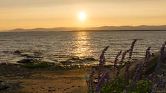 Sunset - Coucher de soleil, L'Islet sur Mer, P.Q., Canada - 7766 (rivai56) Tags: coucherdesoleil lisletsurmer pq canada coucher soleil sunset sky fleuve saintlaurent de sur la plage