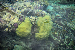 Reef Abstract 8749 (Ursula in Aus (Resting - Away)) Tags: jimclinephototour milnebay png papuanewguinea tawali iphone iphone6