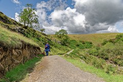Ingleton walk with Button (christopher.czlapka) Tags: photography photo flickr greatoutdoors green love landscapes landscape england uk dog walk ingleton