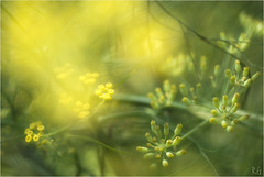 Saint Eden - Plouescat (Richard Giulielli) Tags: bretagne finistère saint eden plouescat macro