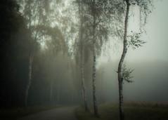 The Time of the Year (ursulamller900) Tags: pentacon2829 landscape landschaft nebel fog misty birch birken autumn herbst