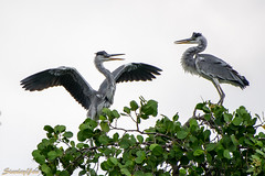 D850-2758 (yowstanley) Tags: nikon nature bird 200500mm d850 tree garden