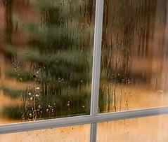 Seeking clarity....... (d.cobb56) Tags: mindfulness drops rain reflection softlight clarity calm calmness stillness unhurried absorbing blissfulmoments dreaming storms raining window outside