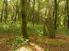 DSCN5566 (norwin_galdiar) Tags: bretagne brittany breizh finistere monts darrée nature landscape paysage
