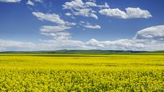 Field of Dreams (KJRphotoz) Tags: canada canadianrockies landscape alberta wildflowers sky watertonlakesnationalpark waterton