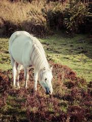 Natures Beauty.. (Emma Yeardley) Tags: wildlife wildpony pony longmynd shropshirehills aonb countryside rural shropshire churchstretton nikon d7500 welshmountainpony sigma animal dof