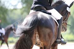 _MG_9811 (dreiwn) Tags: dressurprüfung dressurreiten dressurpferd ridingarena reitturnier reiten reitplatz reitverein reitsport ridingclub equestrian horse horseback horseriding horseshow pferdesport pferd pony pferde tamronsp70200f28divcusd dressur dressuur dressyr dressage