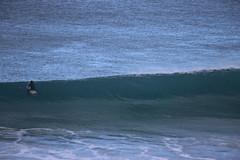 IMG_3554 (gervo1865_2 - LJ Gervasoni) Tags: surfing with whales lady bay warrnambool victoria 2017 ocean sea water waves coast coastal marine wildlife sealife blue photographerljgervasoni