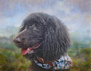 Poodle Puppy Profile