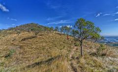 Árvore solitária (mcvmjr1971) Tags: vermelho parque estadual serra da papagaio baependi gerais minas brasil pouso do mãe douro trilha para pico chorão nikon d7000 mmoraes travel viagem 2018 trilhandocomdidi