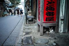 neko ni onsen-manju (N.sino) Tags: m9 ultron35mmf17 cat manju onsenmanju kusatsu hotspring 猫 温泉饅頭 西の河原通り お土産屋